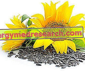 hipertenzijos saulėgrąžų sėklos