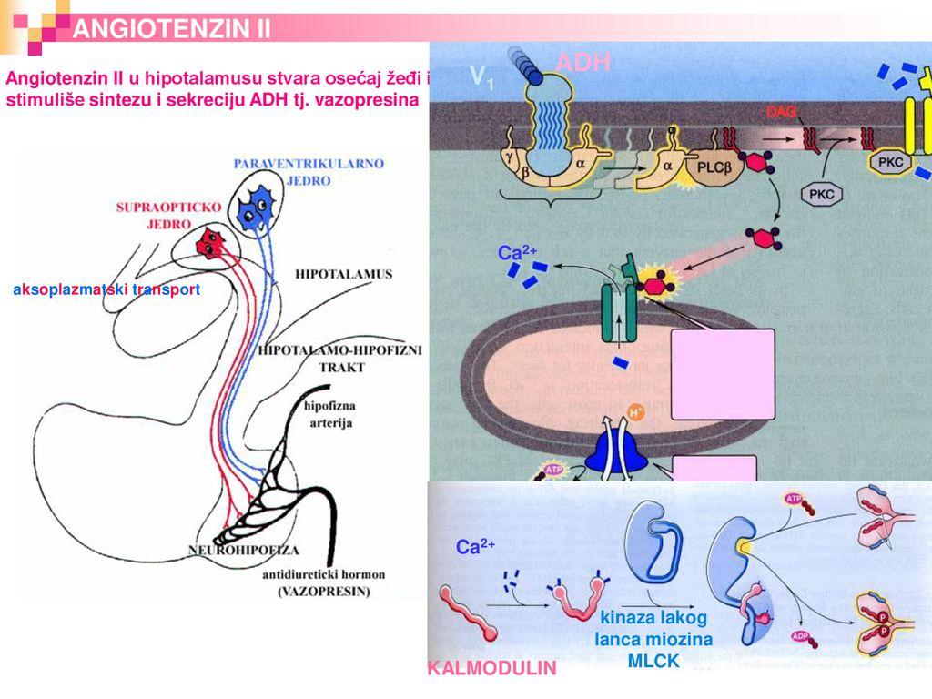 apžvelgia hipertenzijos gydymą