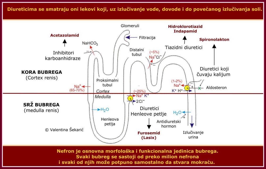 vegetacinė-kraujagyslinė distonija ir hipertenzija hidroterapija hipertenzijai gydyti