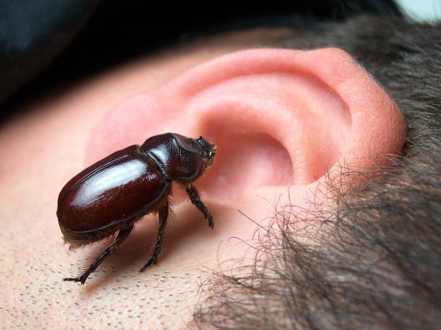 deda ausį su hipertenzija