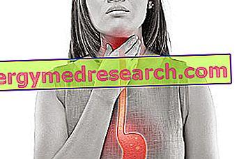 trepang nuo hipertenzijos kas perštėta hipertenzija
