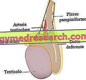 hormonai vyrams hipertenzija