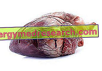 arklio riebalai nuo hipertenzijos