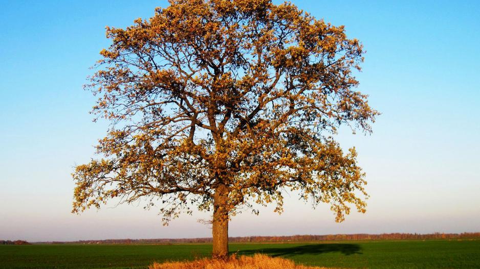 hipertenzijos medžiai)
