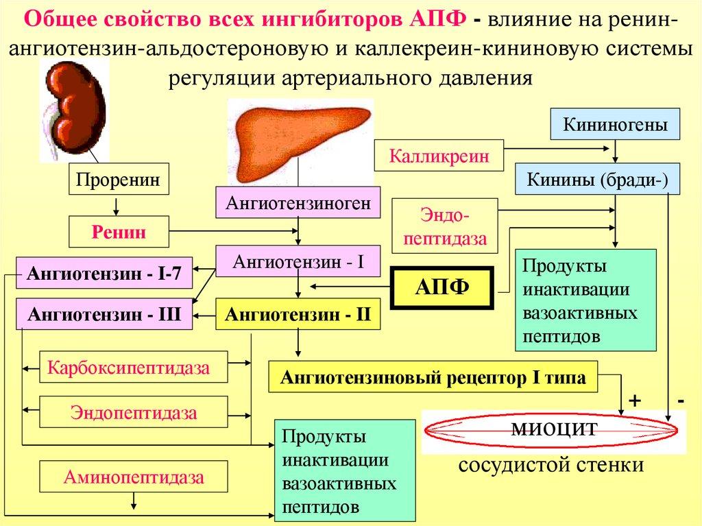 hipertenzija gydomi APF inhibitoriai