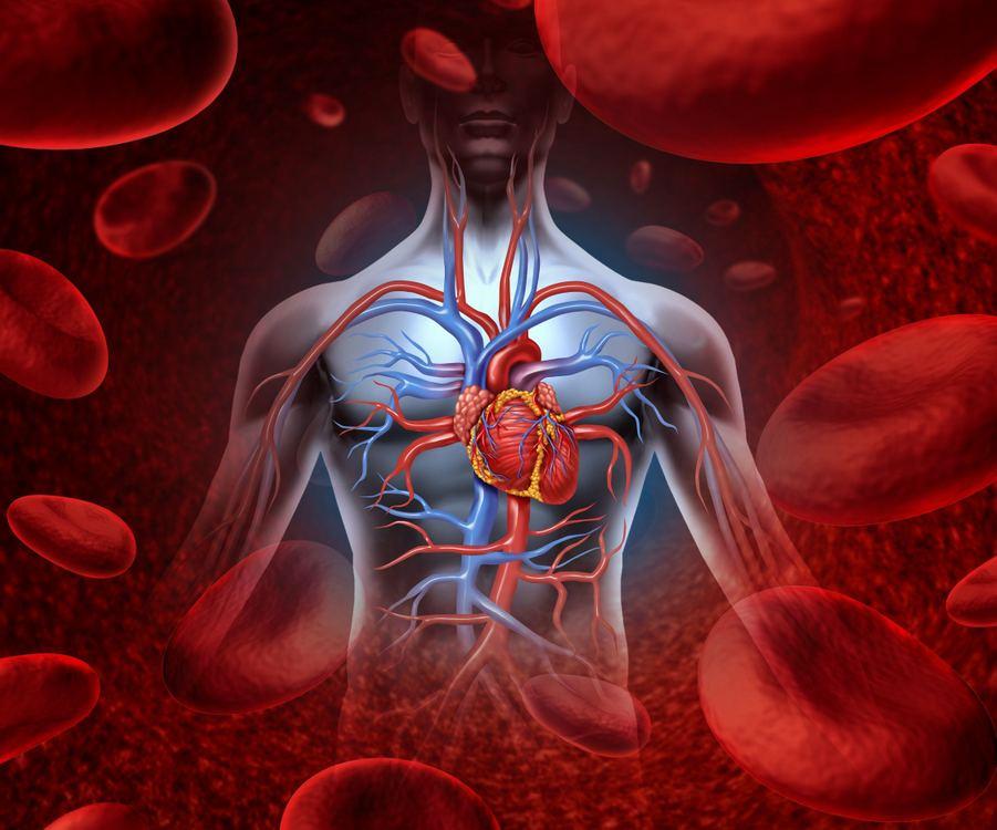 širdies treniruotės širdies sveikatai