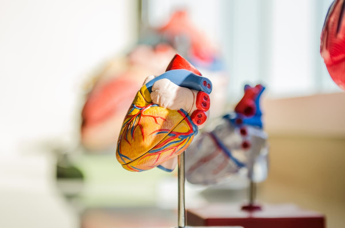 galite užsiimti boksu su hipertenzija meniu dieta 10 nuo hipertenzijos
