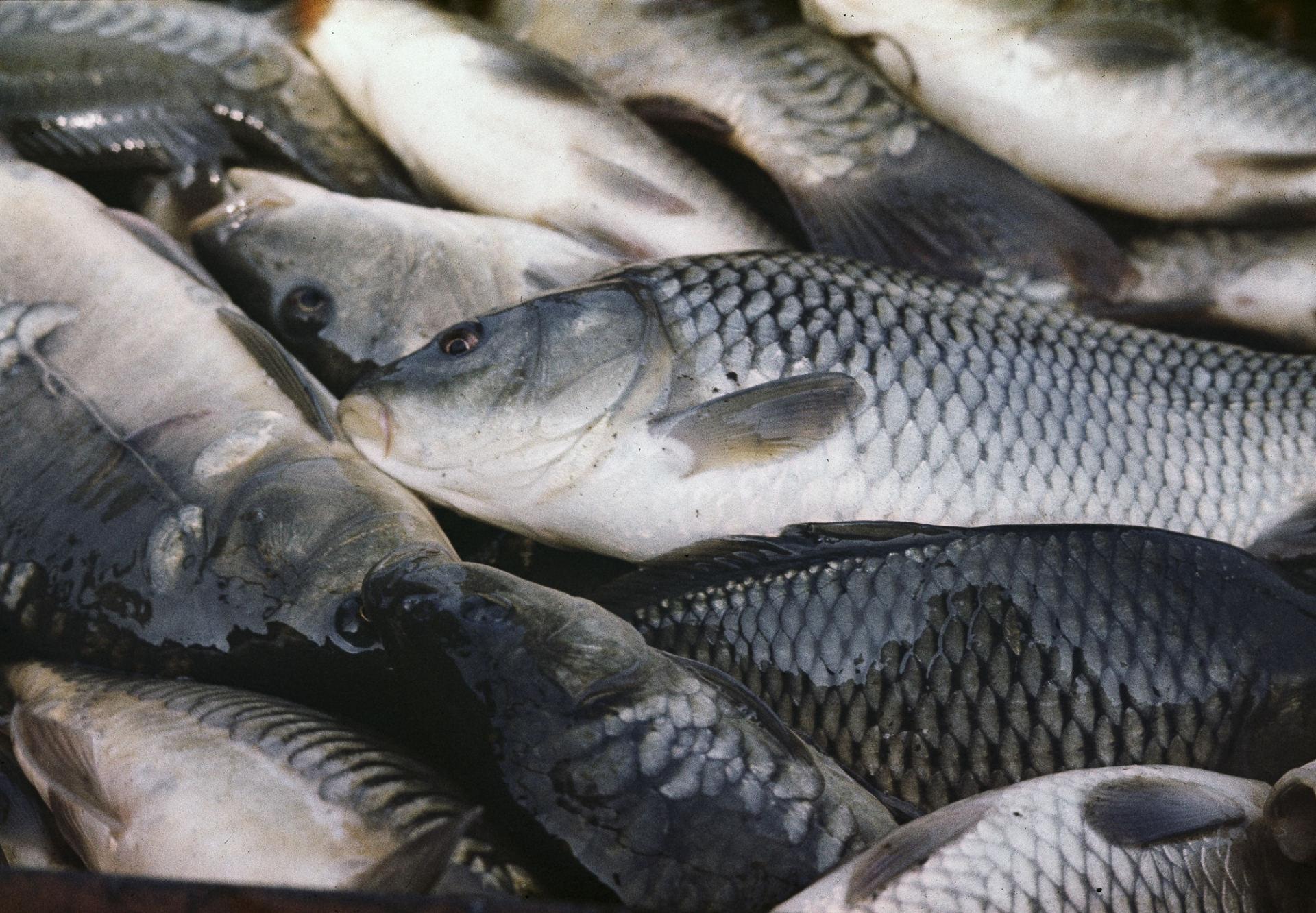 geriausia žuvis širdies sveikatai