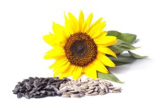 liaudies vaistas nuo hipertenzijos iš sėklų