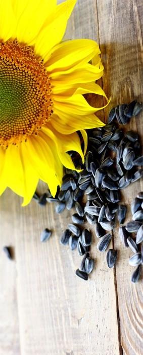 Saulėgrąžų sėklos ir miltai turėtų tikrai būti mūsų spintelėse
