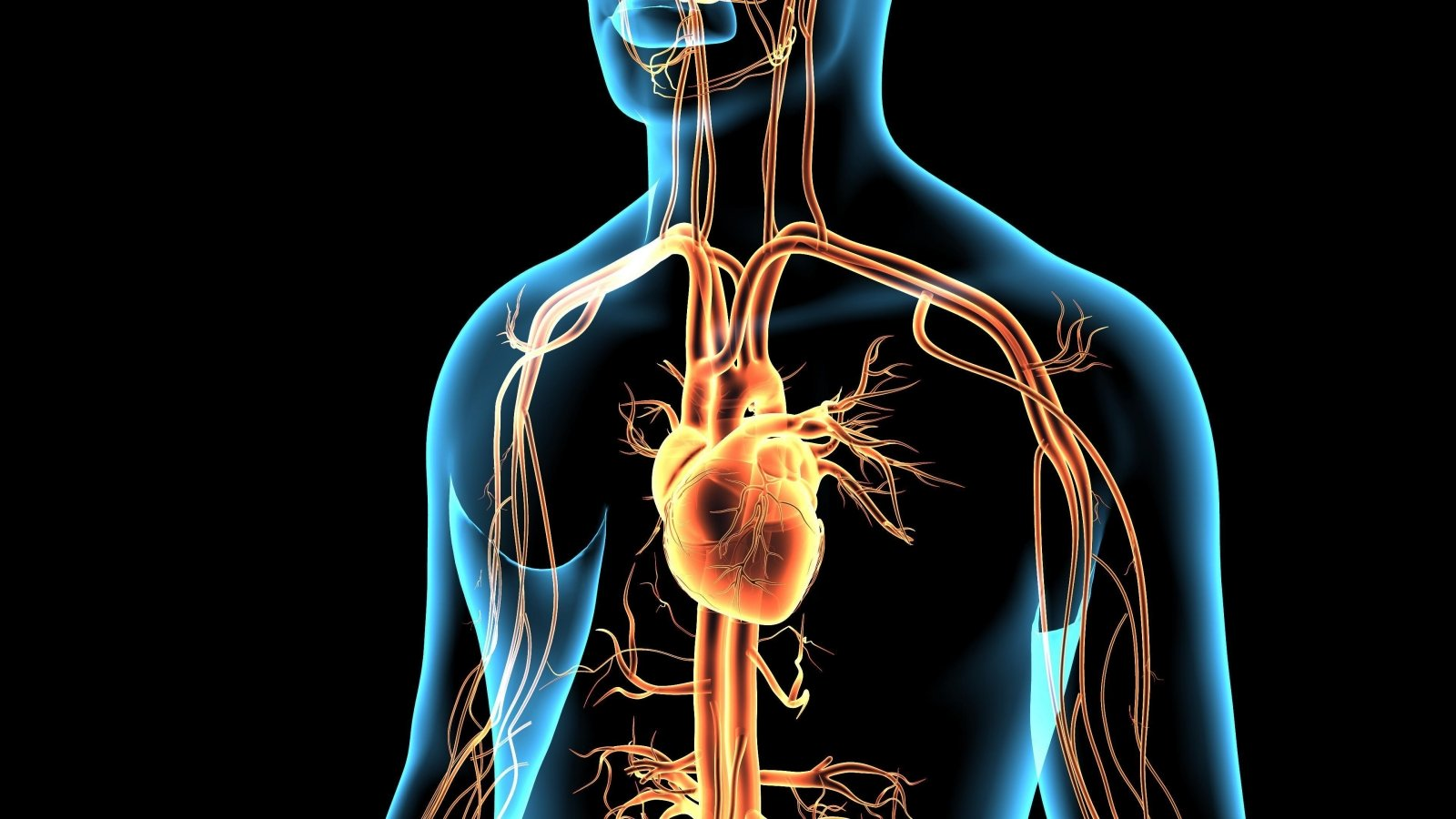 kinoja ir širdies sveikata
