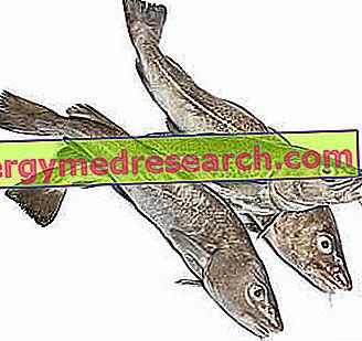 džiovintos žuvys nuo hipertenzijos