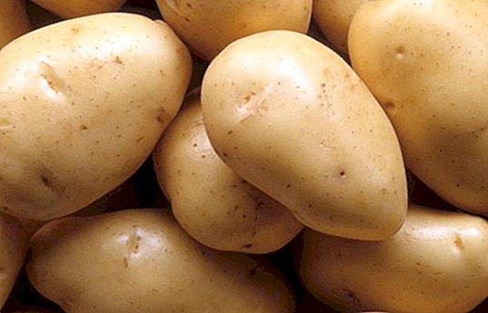 bulvės nuo hipertenzijos)