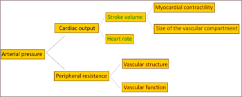 centaury su hipertenzija