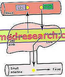 cholesterolio norma esant hipertenzijai žmonių hipertenzijos požymių