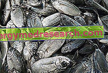 Džiovinta žuvis - nauda ir žala. Jūrinių žuvų nauda ir žala