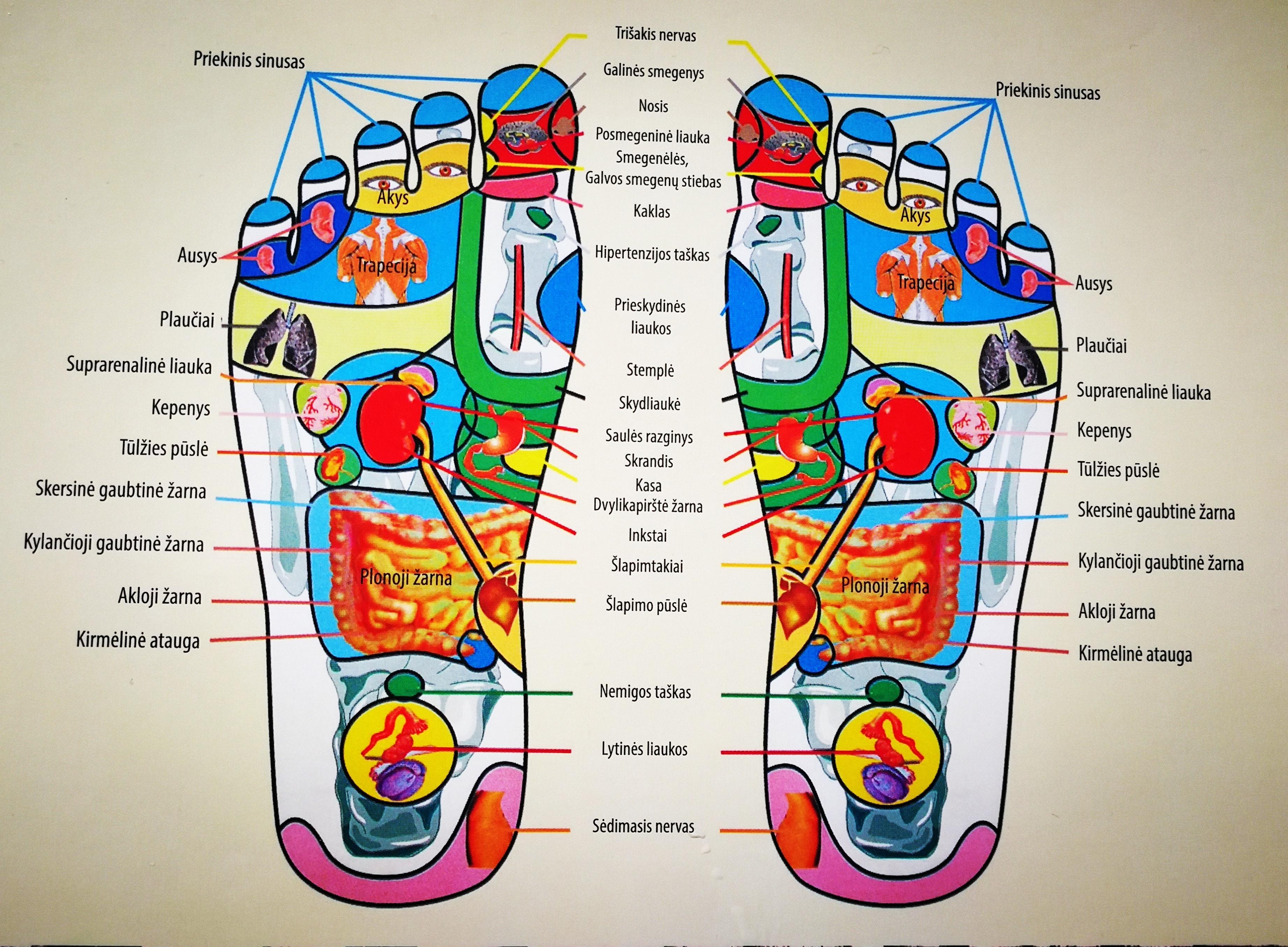 akupunktūros hipertenzijos taškas)