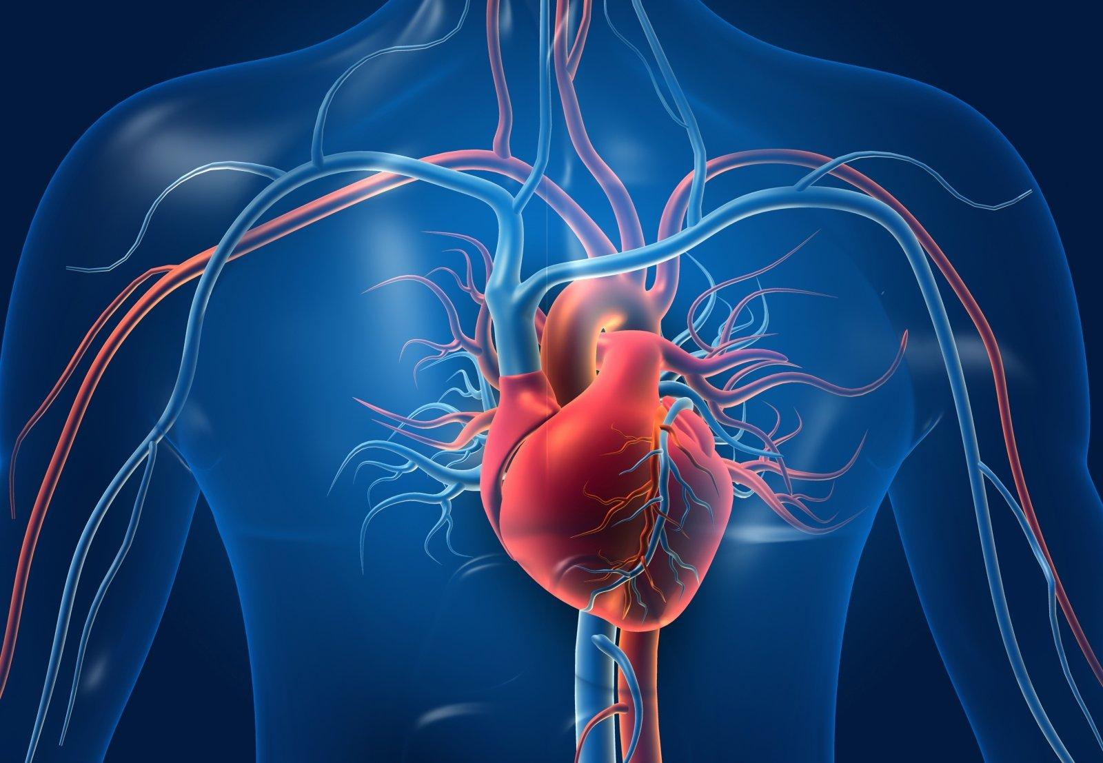 Širdies sveikata. Ką apie ją žinome?