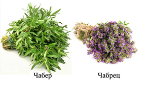 čiobreliai ir hipertenzija)