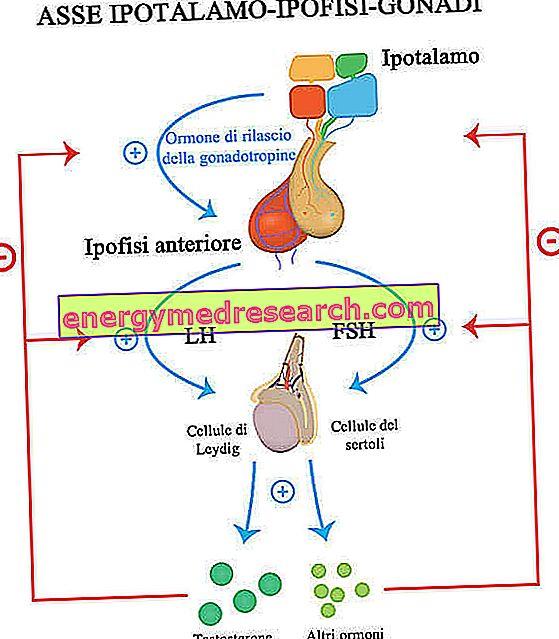 hormonai vyrams hipertenzija)