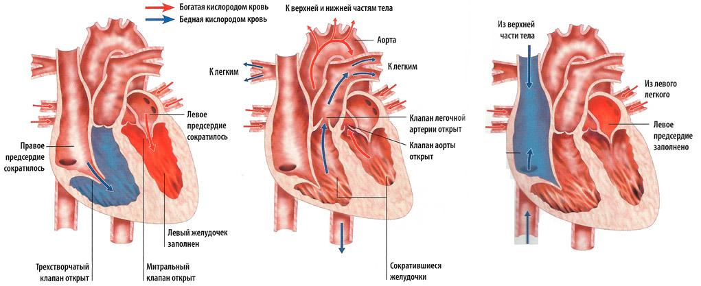 auskultacija dėl hipertenzijos)