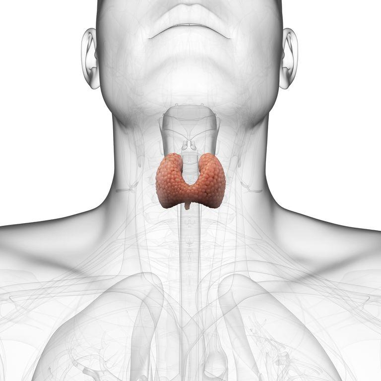 hipertenzija ir skydliaukė