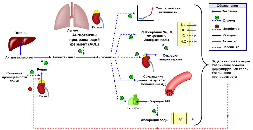 hipertenzijos 2 stadija 3 laipsnių rizika 4
