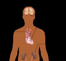 viardot nuo hipertenzijos)